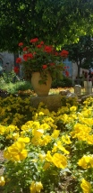 Some of the flowers from the gardens at the Church of Saint Anne.